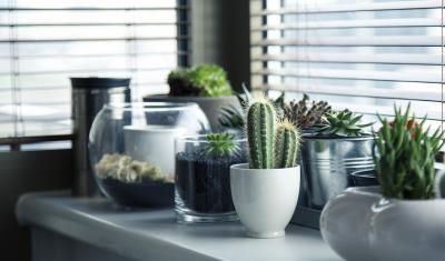 Rastliny v kancelárii